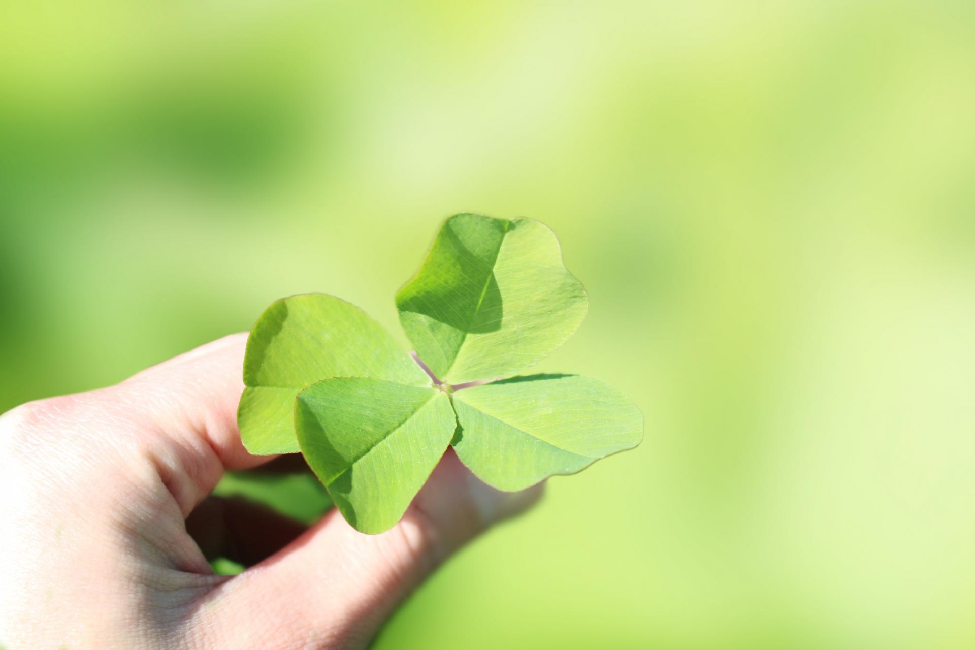 「運 を 良く する」の画像検索結果